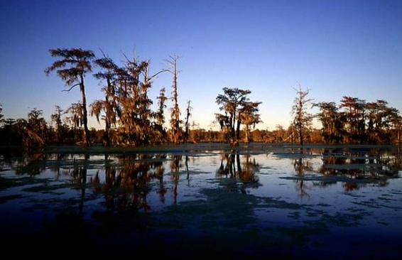 Tour Louisiana Swamps with Airboat Adventures