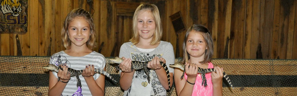 Witness baby alligators near New Orleans with Airboat Adventures!