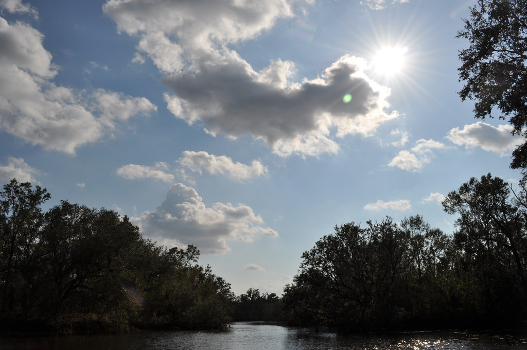 alligator tour near new orleans