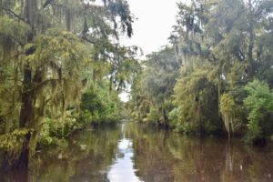 new orleans swamp tour with alligators