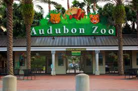 audubon zoo, adventures for kids in new orleans